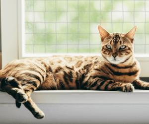 Katze vor fenster netz