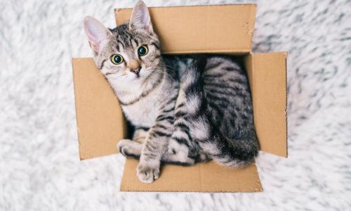 Katzennetze Shop Versand