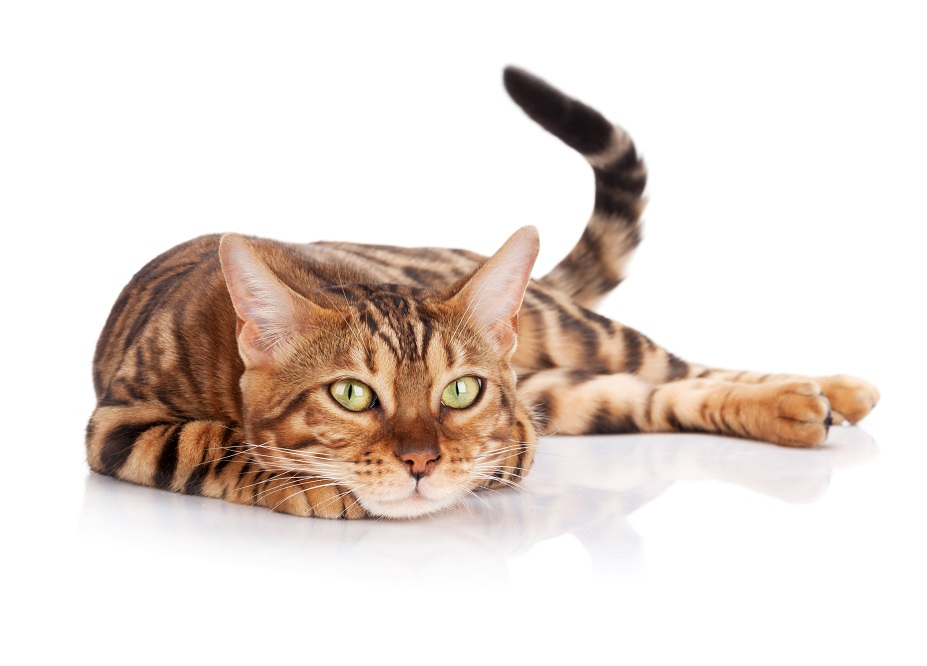 Katze im Katzennetz Shop
