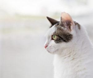 Eigenmontage Ihrer Katzensicherung
