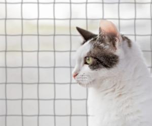 Katze vor Fenster mit Netz