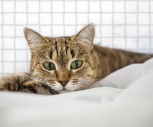 Katze vor Katzennetz
